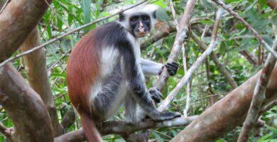 Como saber si una especie es extinta